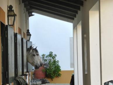 golega_horsestables_2horseheads