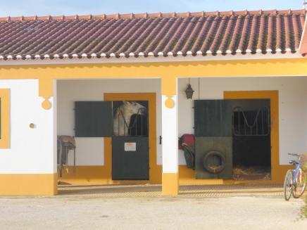 golega_horsestables_white horse