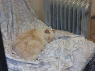 lisboncat_asleep