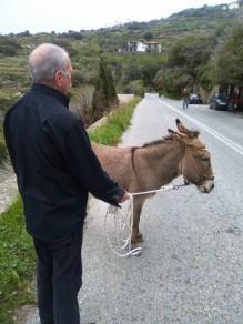 andros_gb&donkey