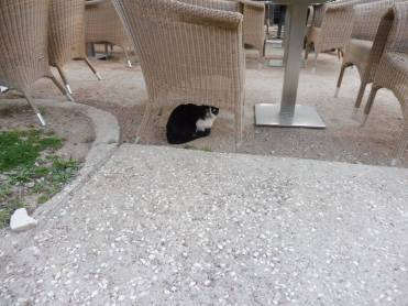 athens_catunderchair