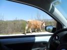 On the road to Trebinje, Bosnia.