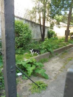 cat_trieste
