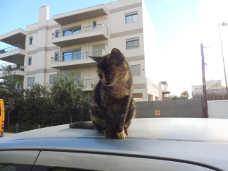 athens_cat@rennas