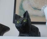 A cellar cat (Kellerkatze), put on top of wine barrels, in Heidi's collection.