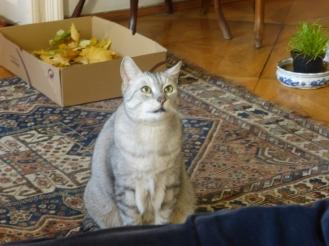 Heidi's cat Schatzi, who we called Chubby.