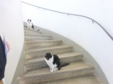 cats_housecats@sigmundsgasse11_onsteps_vienna
