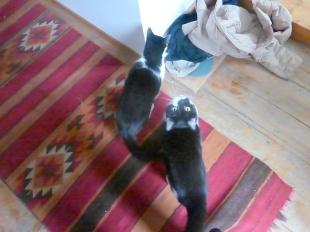 cats_housecats@sigmundsgasse11_vienna