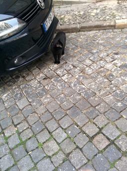 lisbon_blackcat1