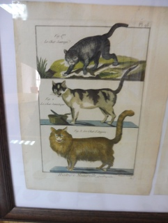 In the Cat's Museum, Kotor