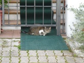 A Duino cat, elegantly waiting to be let inside.