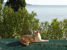 Princess Kiki in Mlini