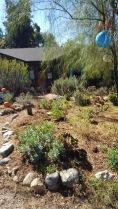 A native plant garden.