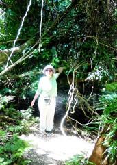 rainforestwalk_eebranches