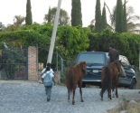 horses&boys_ajijic_mar22
