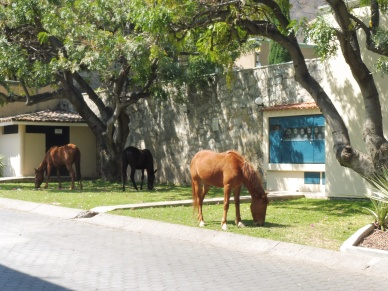 horses@lazarocardenas_ajijic_mar10