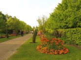 regentspark_orangerow_london_apr23