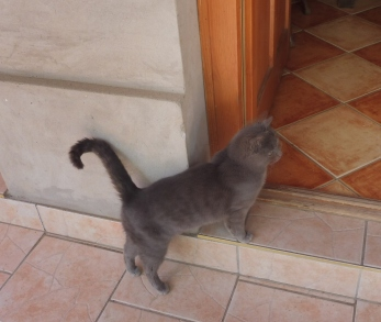 cat_bondi2_somogyszentpal_may4