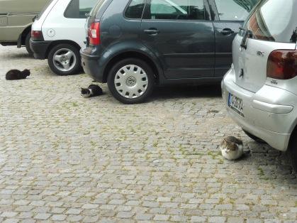 catsundercars_porto_may26
