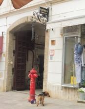 dog&hydrant_pecs_may11