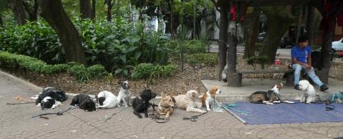 dogwalkers2_citypark_lacondesa_mxcity