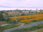 Marigold fields around Lake Patzcuaro